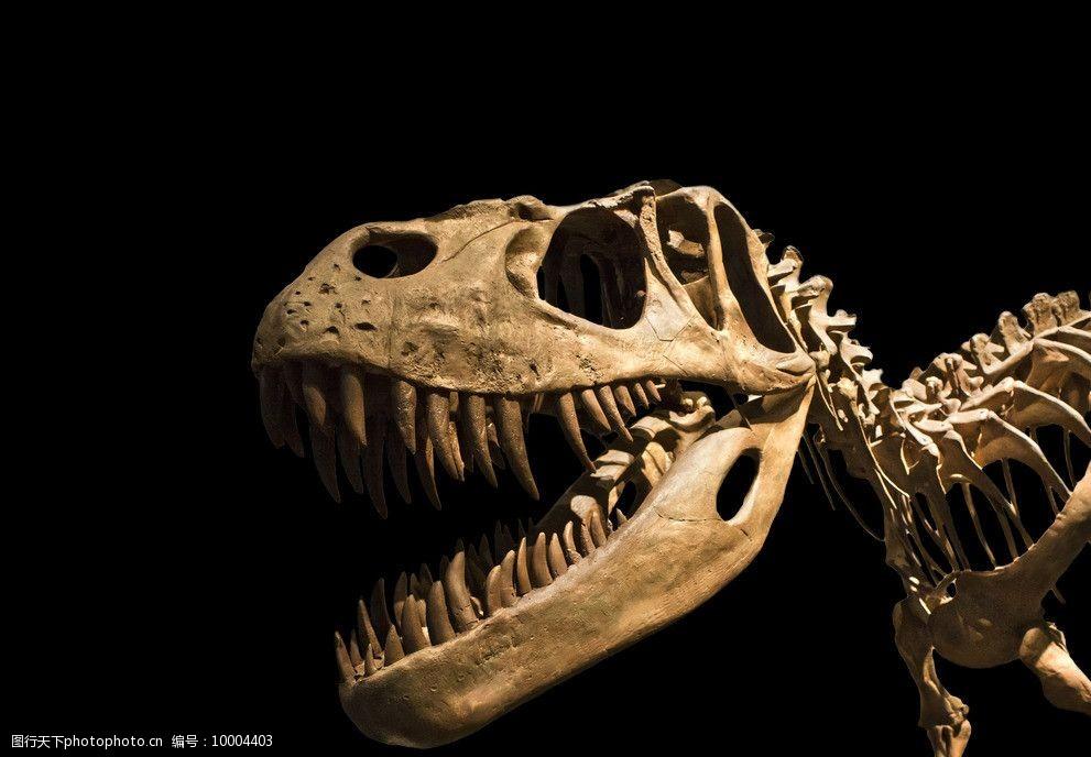 恐龙名字资料大全恐龙资料说明文一篇关于恐龙的说明文